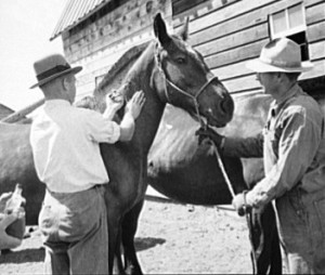 Horse-Vaccination